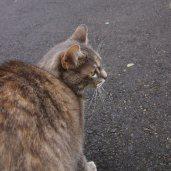 La Suisse chat